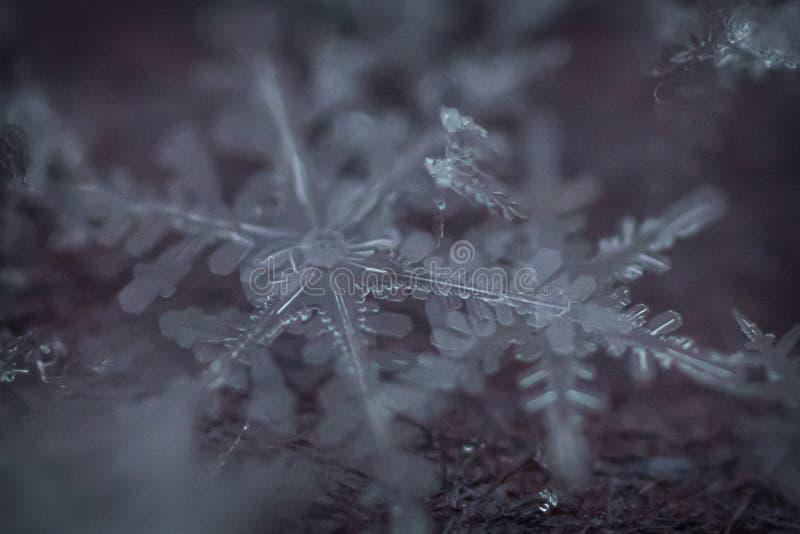 Makroschuß von gefrorenen Schneeflocken 2 lizenzfreies stockfoto