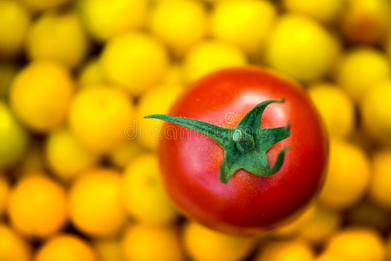 Makroskott av den nytt valda mogna röda tomaten och små gula plommoner royaltyfri bild