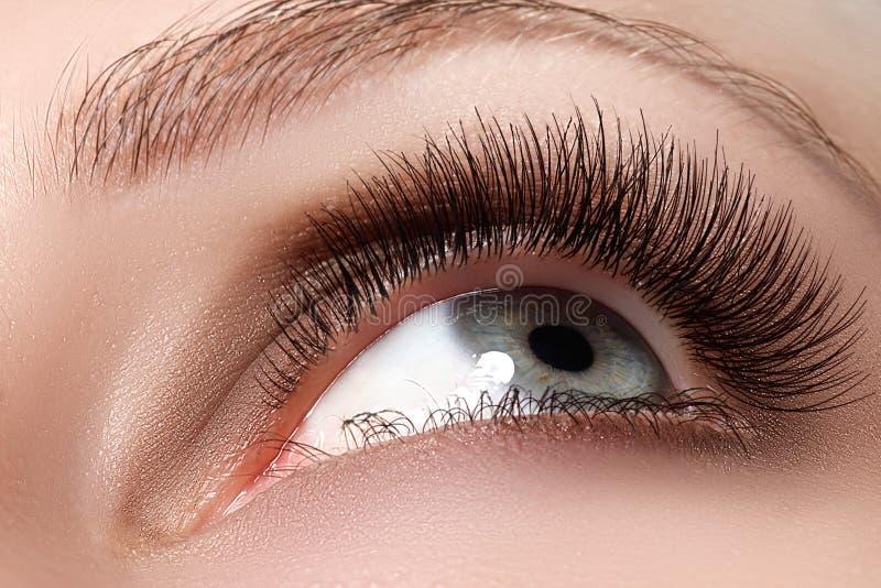 Makroskott av det härliga ögat för kvinna med extremt långa ögonfrans arkivbild