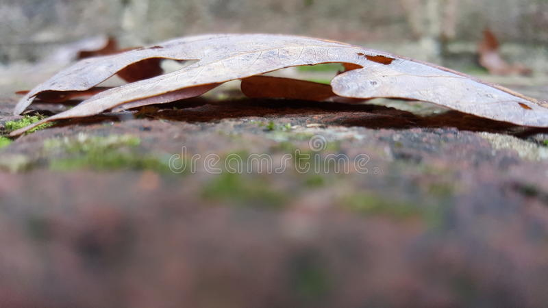 Makroskott av ett blad på tegelstenmoment arkivfoton