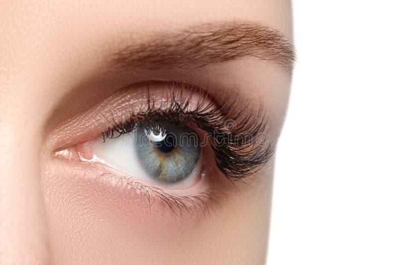 Makroskott av kvinnas härliga öga med extremt långa ögonfrans Sexig sikt, sinnlig blick Kvinnligt öga med långa ögonfrans royaltyfri bild