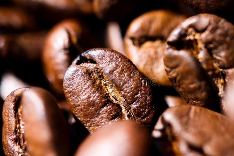 Makroslut upp av högen av grillade bruna kaffebönor i naturligt solljus som visar detaljer av yttersida royaltyfri bild