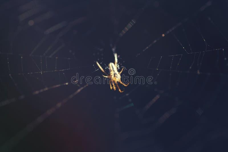 Makrospinne, die auf einem Spinnennetz auf einem dunklen Hintergrund sitzt stockfotografie