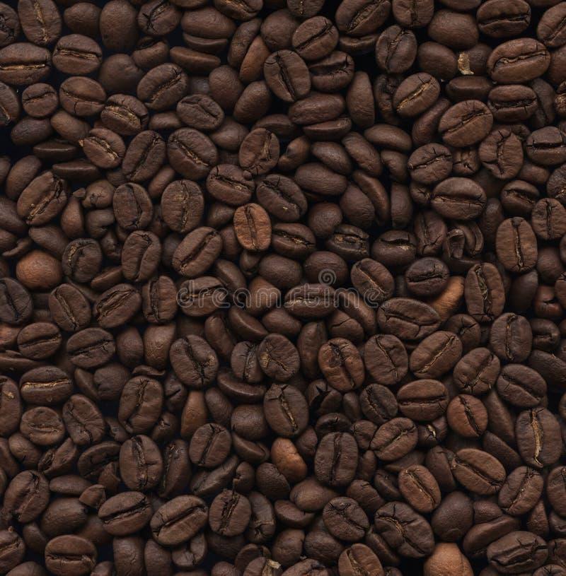 Makrotextur av hela inte malde kaffebönor Arabisk medelro arkivbild