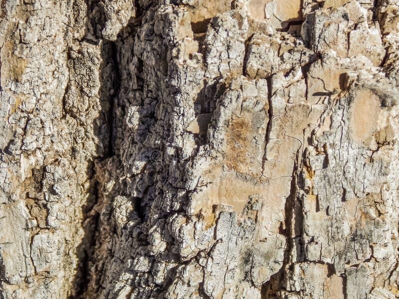 Makrotextur av trädskället i solen arkivbild