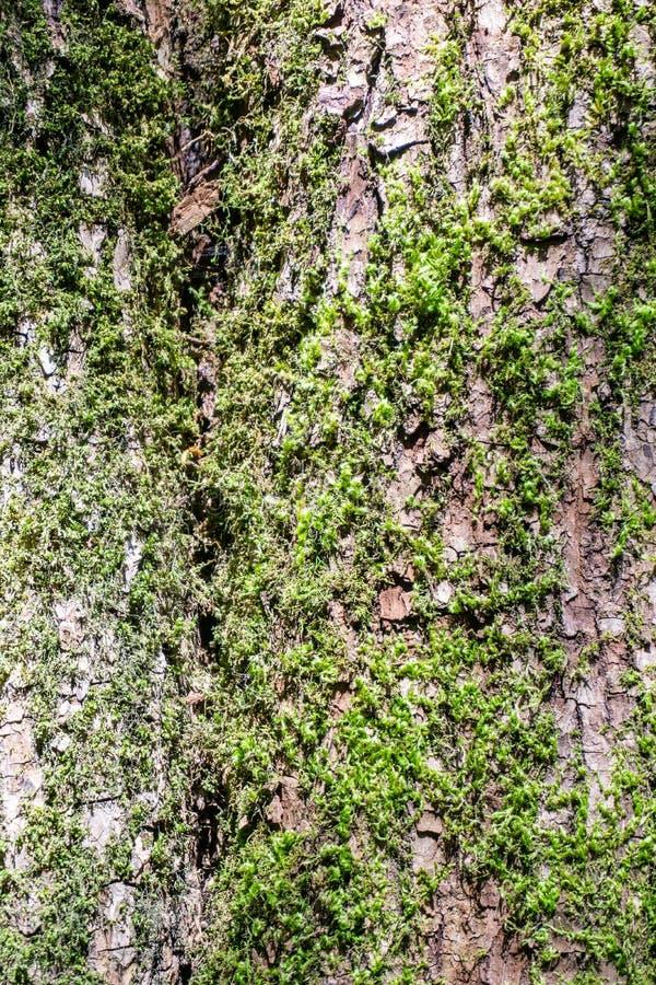Makrotextur av trädskället som textur eller bakgrund arkivfoton