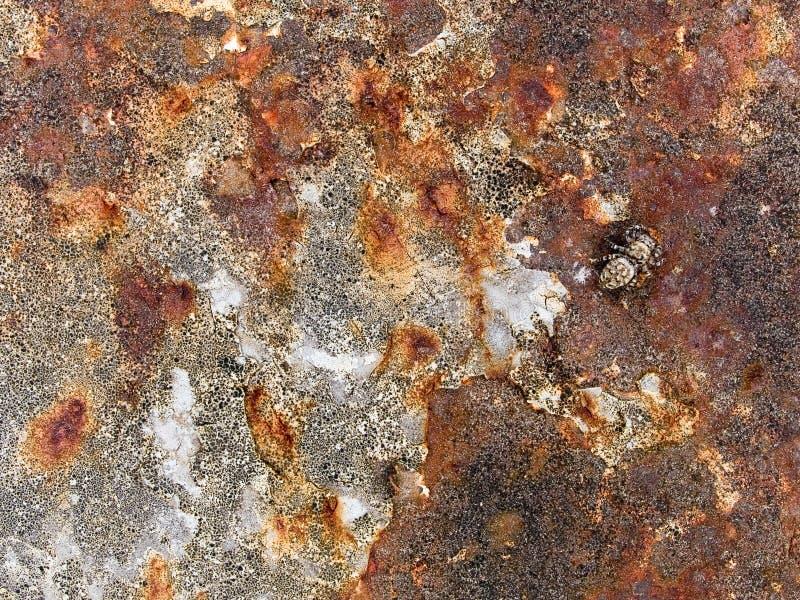 Makrotextur - metall - rostig skalningsmålarfärg arkivfoto