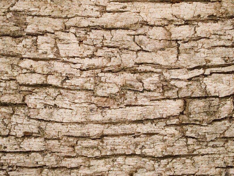 Makrotextur - trä - treeskäll arkivbild