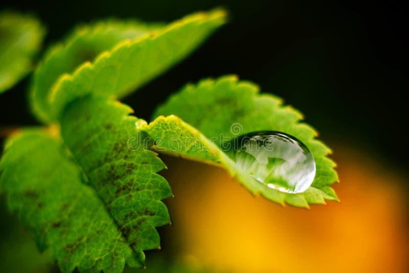 Makrotropfen des Wassers lizenzfreies stockfoto