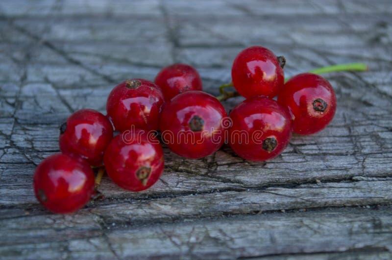 Makrozweig von roten Johannisbeeren lizenzfreie stockfotos