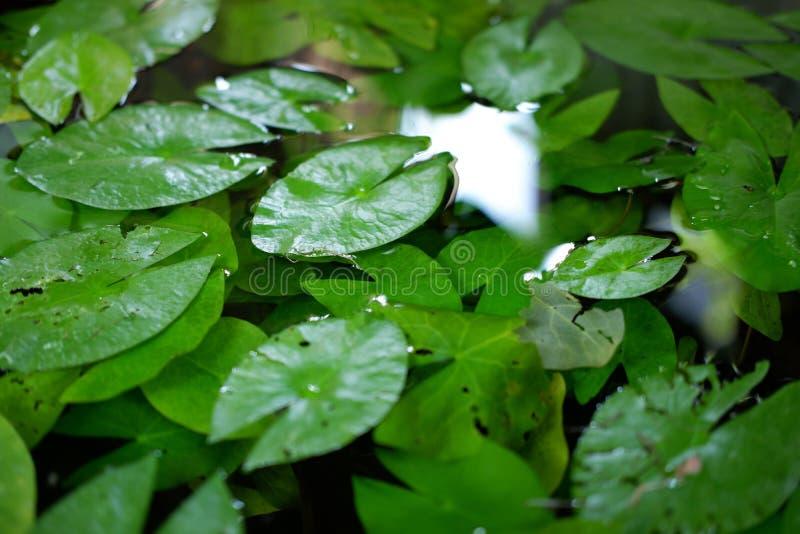Makt av lotusblomma arkivbild