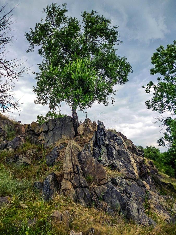 Makten av liv Trädet i granit vaggar royaltyfri foto