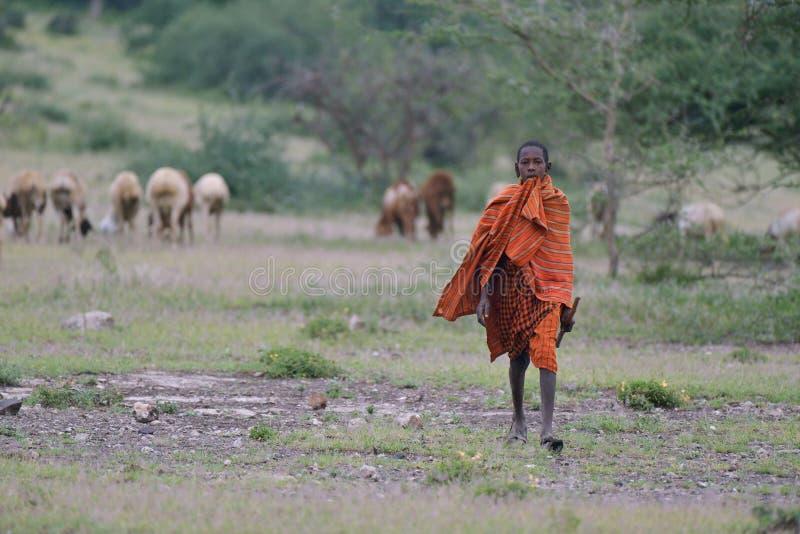Makuyuni, Tanzania, il 9 febbraio 2016: Sheppard dei giovani di Maasai immagini stock libere da diritti