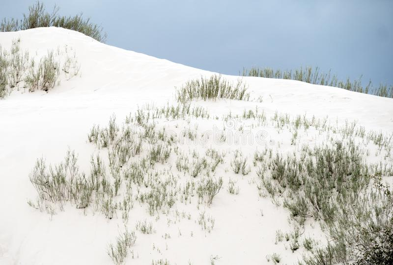 Malörten finner en väg till och med de vita sanderna royaltyfria bilder