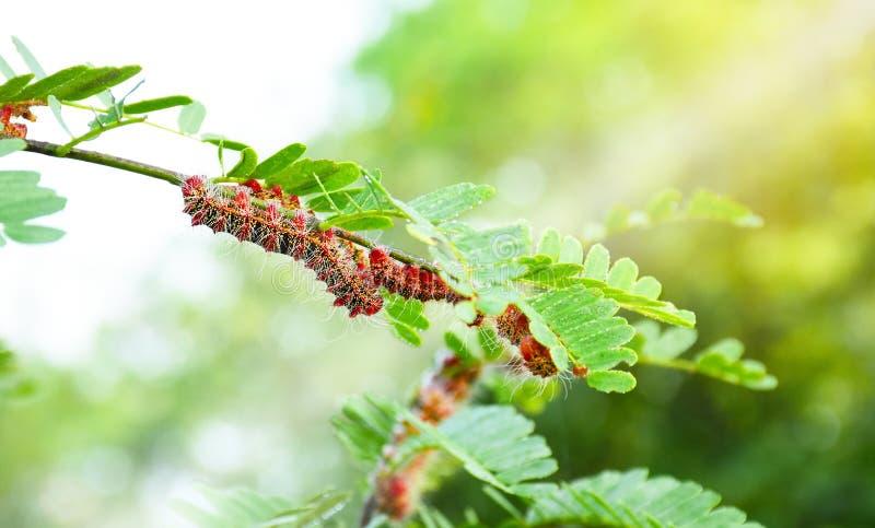 Mal Caterpillar royaltyfri bild