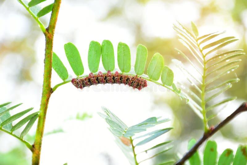 Mal Caterpillar fotografering för bildbyråer