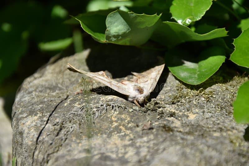 Mal på stenen under växten fotografering för bildbyråer