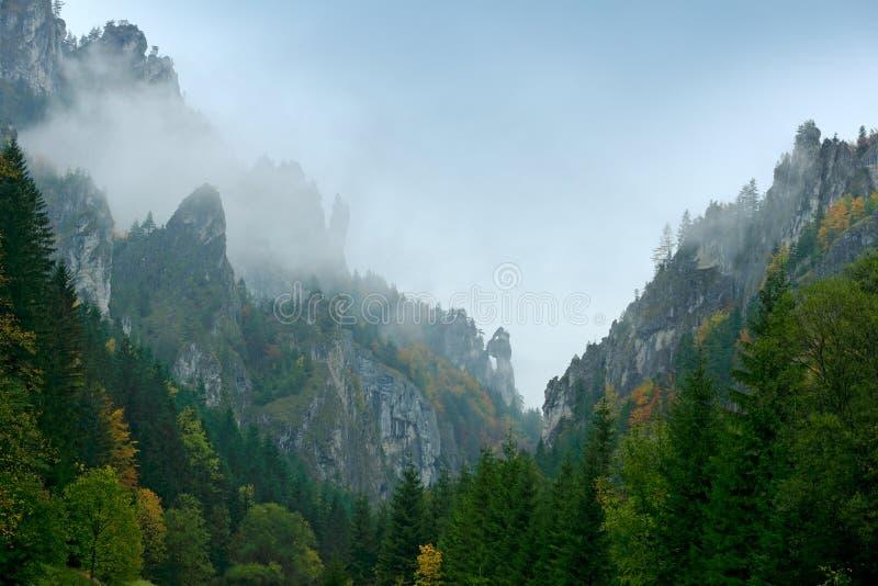 Mala Fatra山,斯洛伐克 黄色结构树 秋天森林,在小山,秋天风景的许多树 与颜色树的木头 多雨的日 免版税库存照片