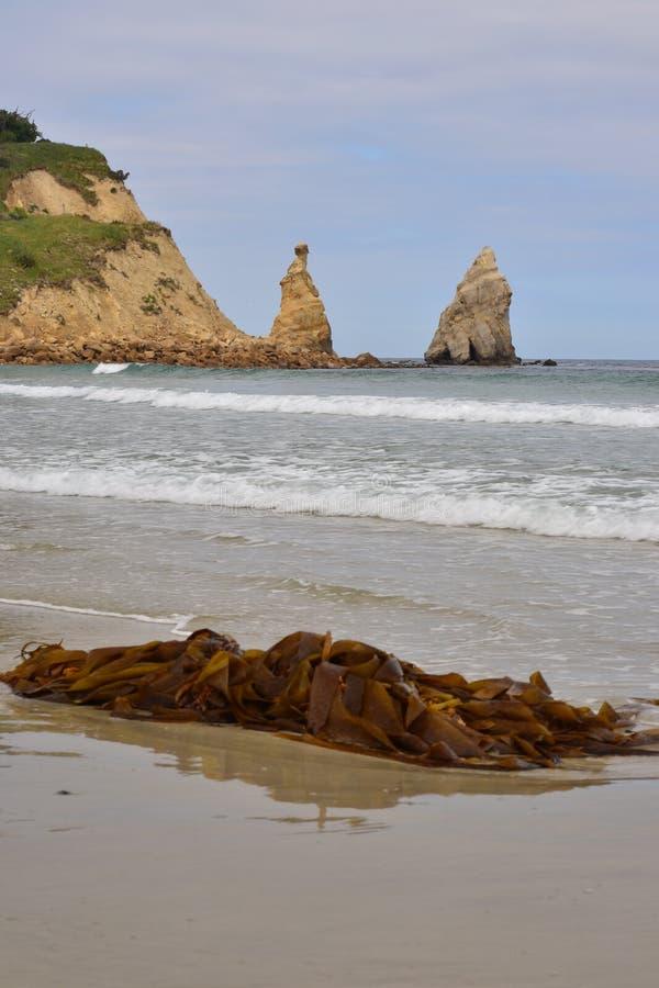 Mala hierba del mar que miente en una playa con la forma única de los sliffs, rocas agudas, Nueva Zelanda imágenes de archivo libres de regalías