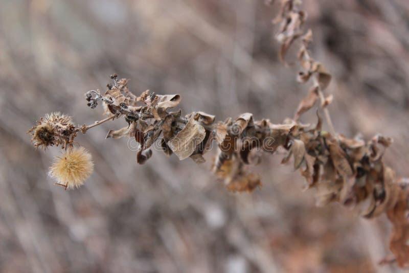 Mala hierba hermosa foto de archivo libre de regalías