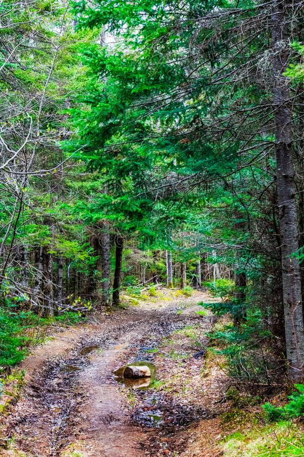 Mala kommunal liten vik parkerar, större Moncton, New Brunswick, Kanada royaltyfri fotografi