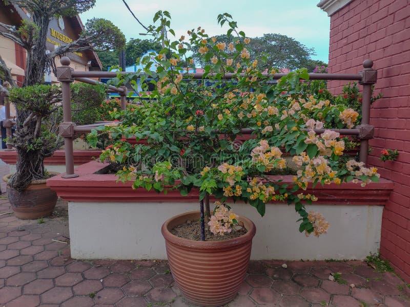 Malacca Malezja, Czerwiec, - 2019: Kwiaty zbliżają Morskiego muzeum fotografia stock