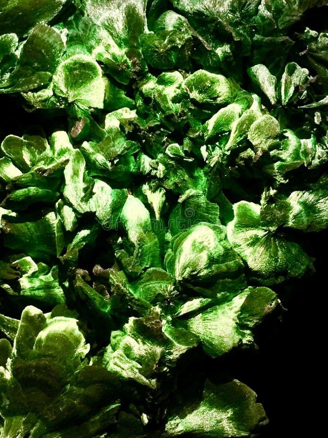 malachite royaltyfri foto