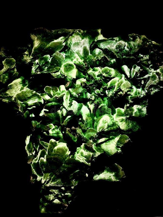 malachite royaltyfri bild