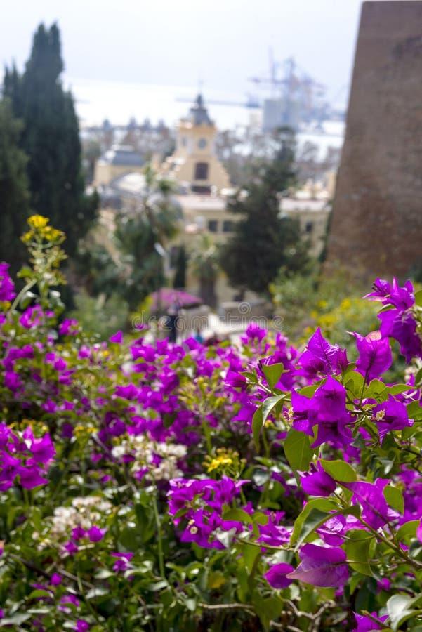 Malaga, Spagna, febbraio 2019 Panorama della città spagnola di Malaga Bella vista Fortezza Alcazaba de Almeria Colore rosa immagini stock