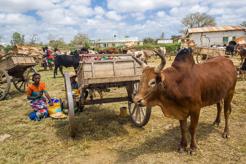 Malagasy people stock photo