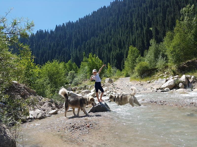Malamutes de la muchacha y de los perros en un río de la montaña fotografía de archivo