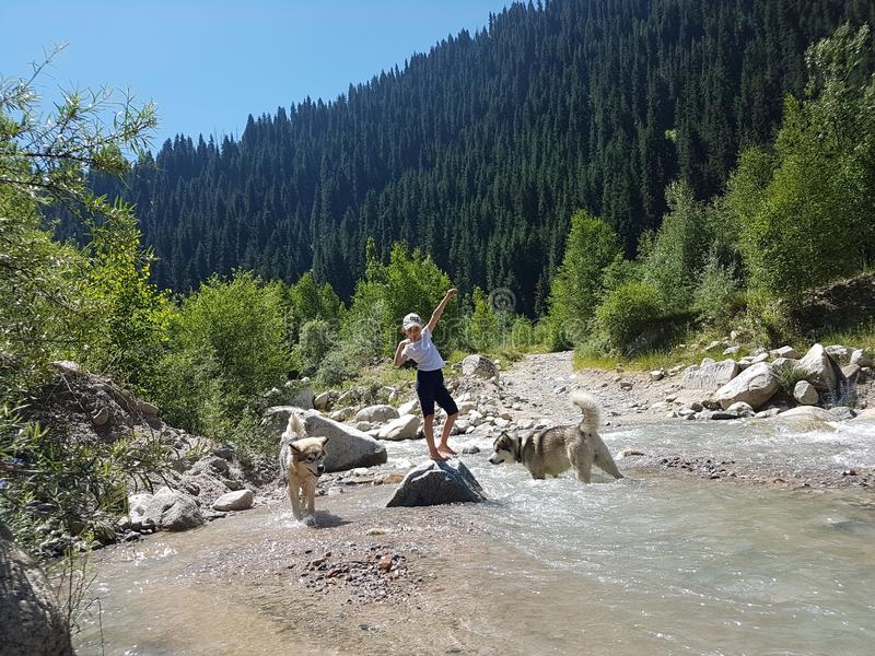 Malamutes de la muchacha y de los perros en un río de la montaña fotos de archivo