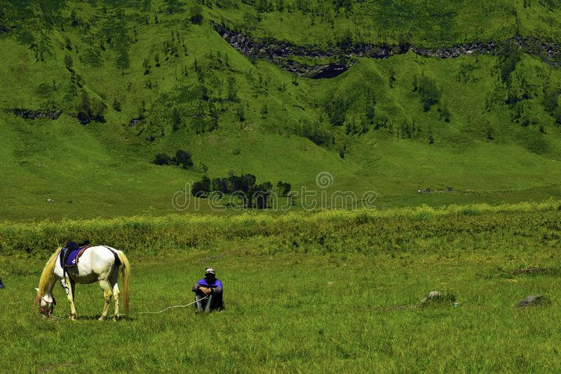 Unreconized people. Scenic Green grass field view of rolling countryside green farm fields with horse stock photo