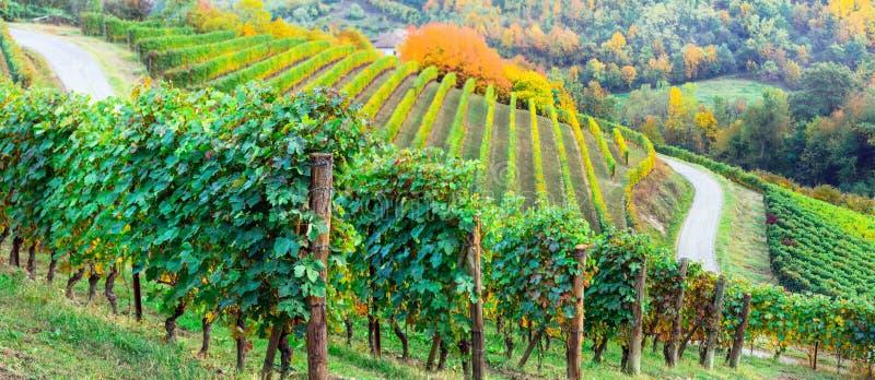 Malarscy winnicy Piemonte w jesień kolorach Włochy obraz stock