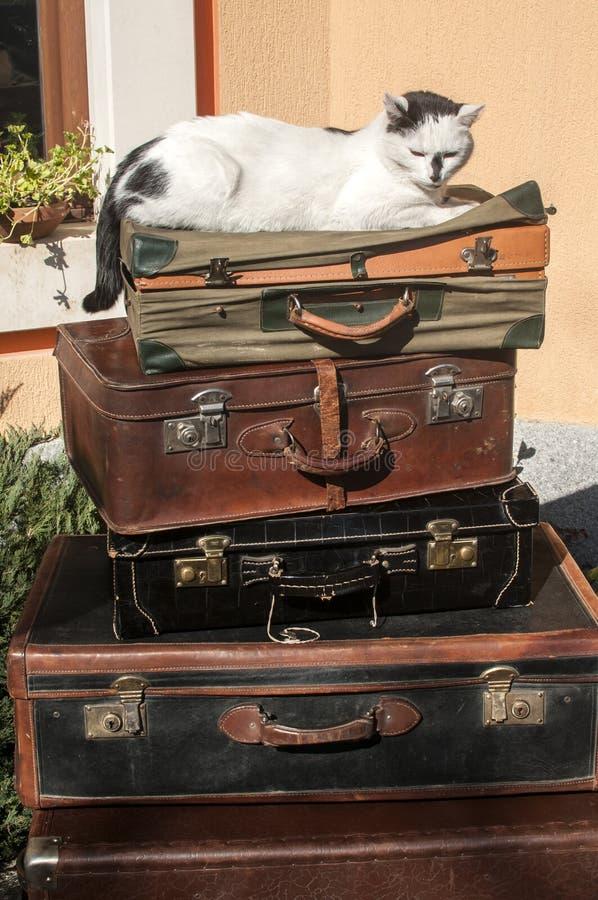Malas de viagem e gato de couro velhos fotografia de stock royalty free