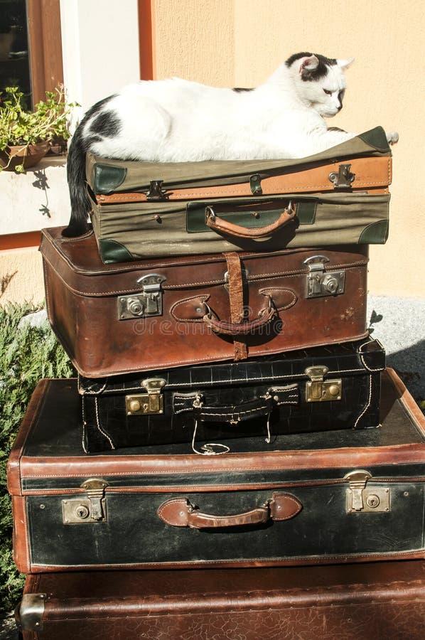 Malas de viagem e gato de couro velhos foto de stock