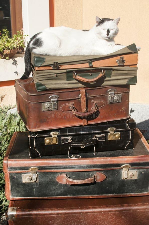 Malas de viagem e gato de couro velhos fotos de stock