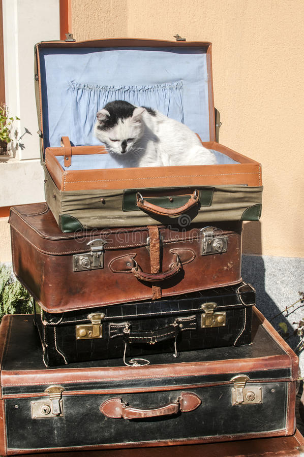 Malas de viagem e gato de couro velhos imagens de stock royalty free