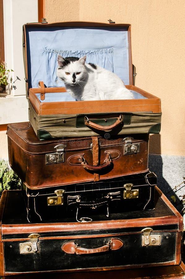 Malas de viagem e gato de couro velhos imagem de stock