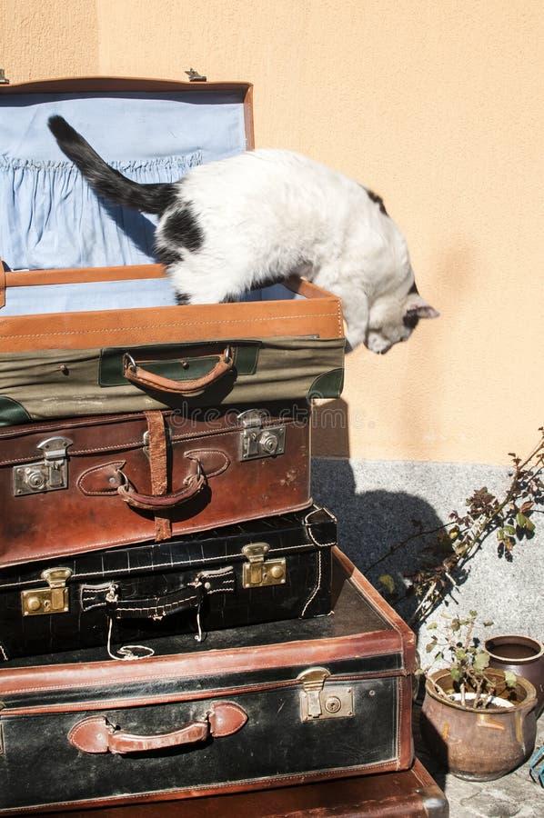 Malas de viagem e gato de couro velhos foto de stock royalty free