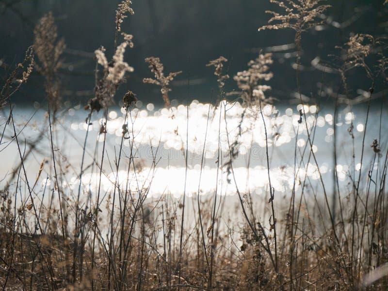 Malas hierbas de la flor bajo puesta del sol 01 imagen de archivo libre de regalías