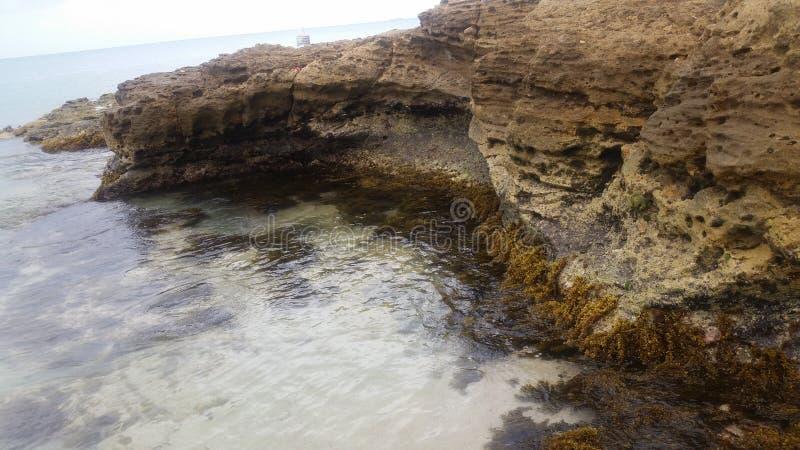 Malas hierbas del mar en los lados de la roca foto de archivo
