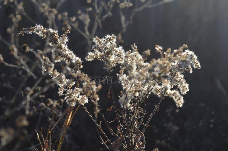 Malas hierbas en el bosque foto de archivo libre de regalías