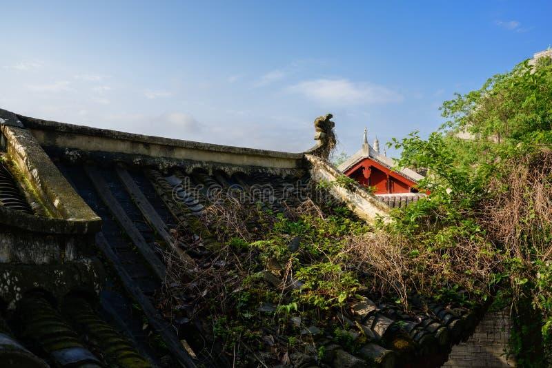 Malas hierbas en el tejado de teja antiguo por mañana soleada de la primavera fotografía de archivo