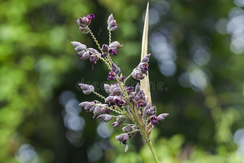 Malas hierbas en la naturaleza, púrpura de florecimiento fotografía de archivo libre de regalías