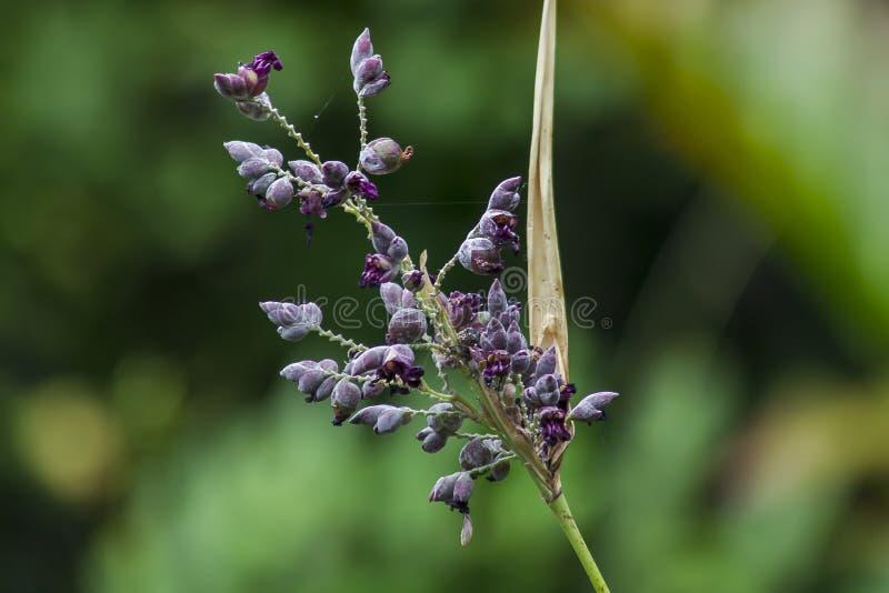 Malas hierbas en la naturaleza, púrpura de florecimiento fotografía de archivo