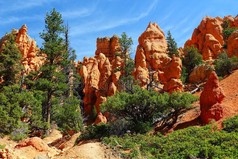 Malas sombras y pinos en el parque de estado rojo del barranco de la roca, Utah fotos de archivo libres de regalías