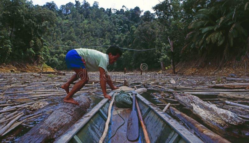 Malasia: Un hombre en los ist de un bote pequeño que intentan cruzar en el río en Sarawak que es lleno de árboles cortados del co fotos de archivo libres de regalías