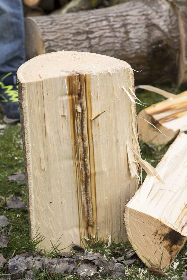 Malattia del taglio dell'albero immagini stock