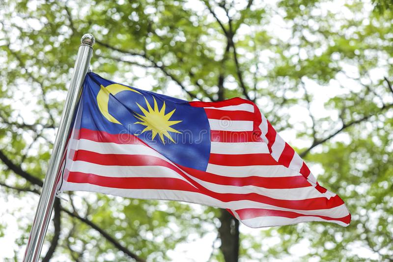Malaysia Flag, Jalur Gemilang. Malaysia Flag also known as Jalur Gemilang waving with the background of Malaysian rainforest trees. In conjunction of stock photography